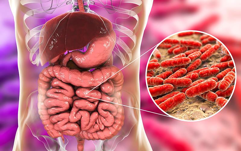 Дисбактериоз в организме