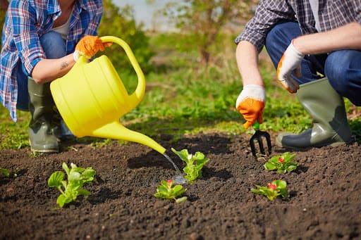 Окучивание грядок огорода