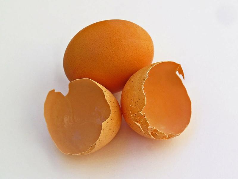 Скорлупа куриного яйца