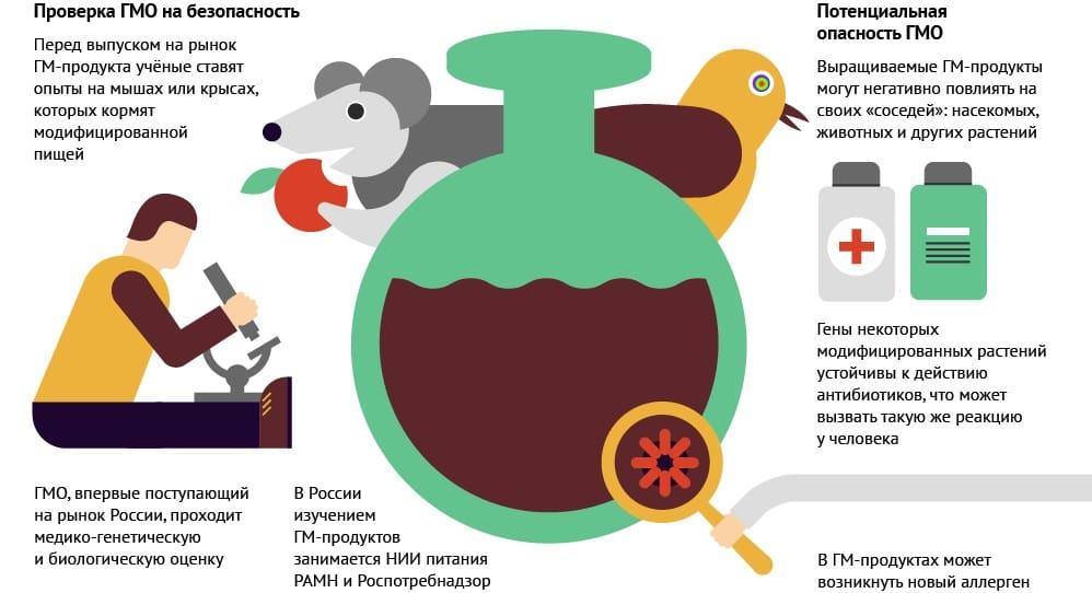 Безопасность ГМО в продуктах