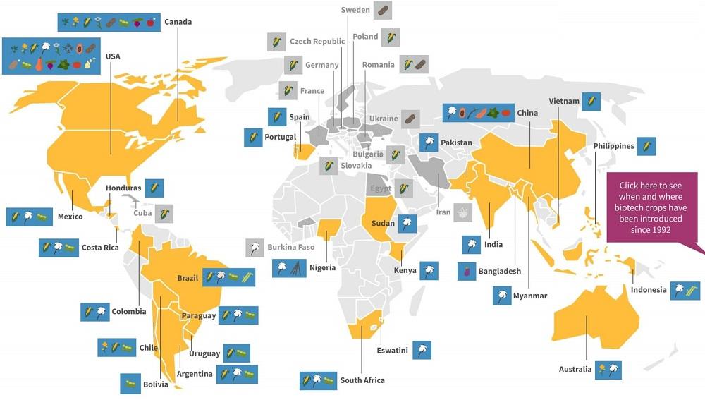 ГМО в мире
