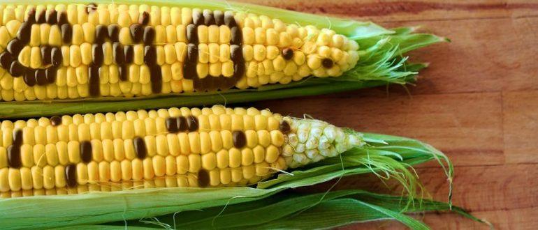 ГМО в продуктах