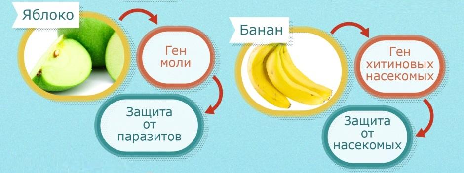 ГМО в яблоках и бананах
