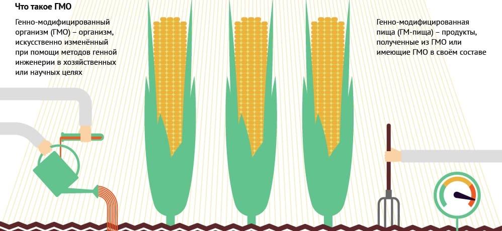 Генно-модифицированные организмы в продуктах