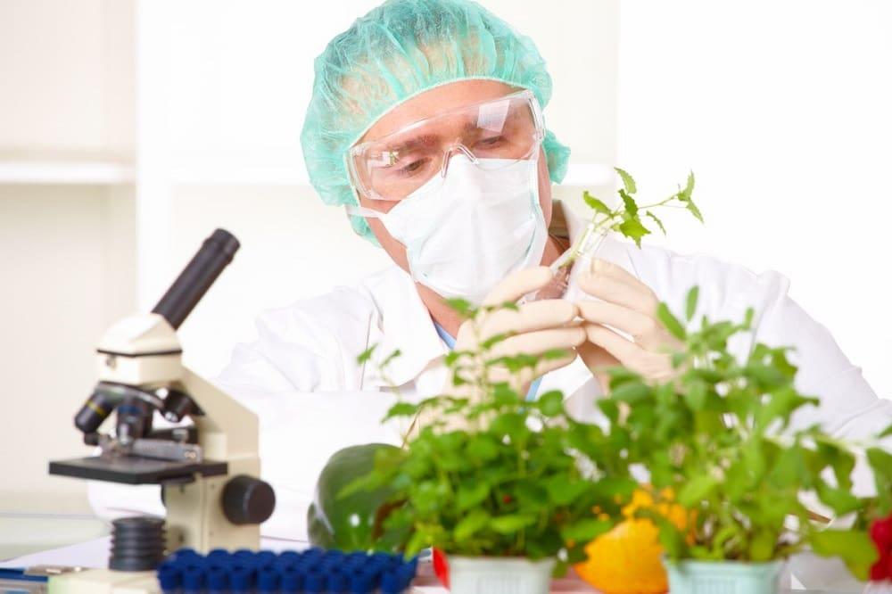 Исследование ГМО-продуктов