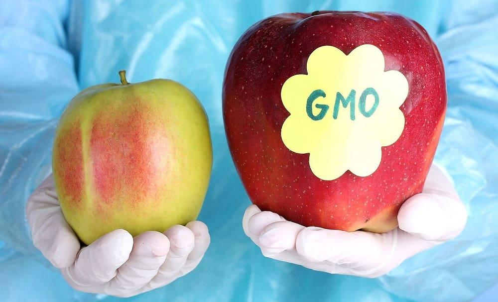 Обычное и яблоко с ГМО