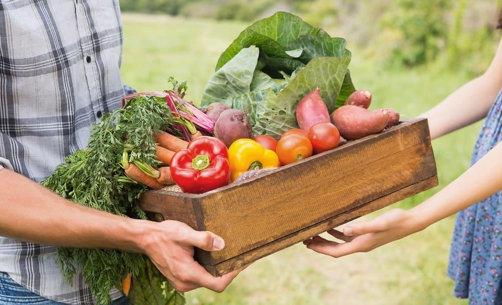 Овощи на ферме