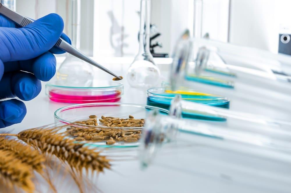 Пищевая безопасность ГМО