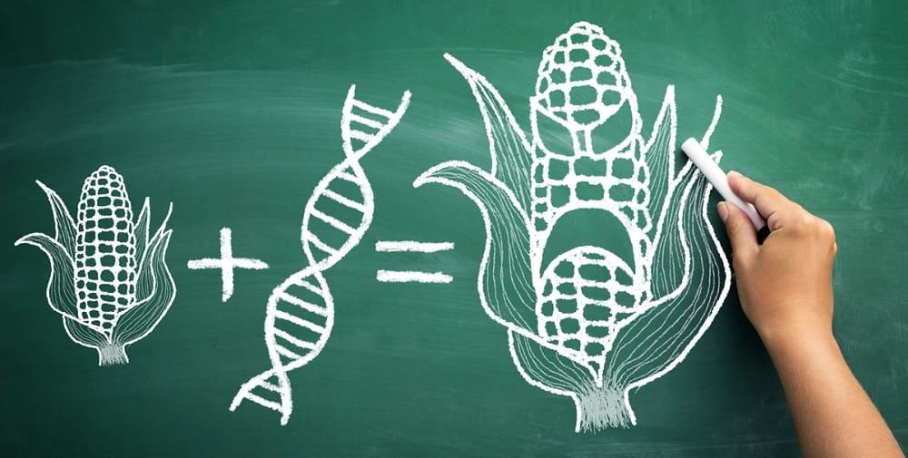 Страшилки про ГМО