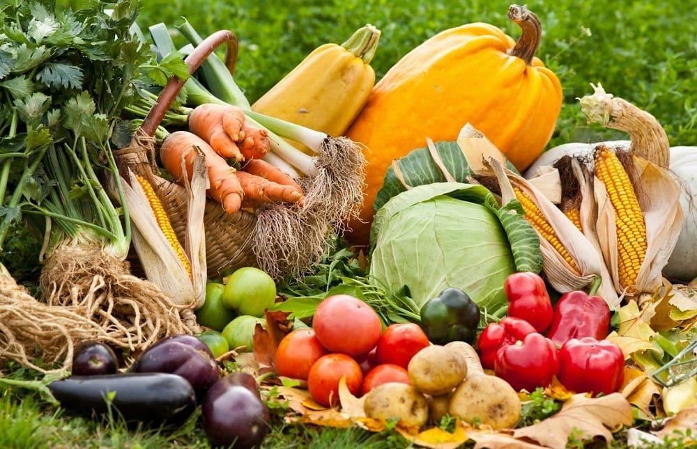 Свежие овощи осенью