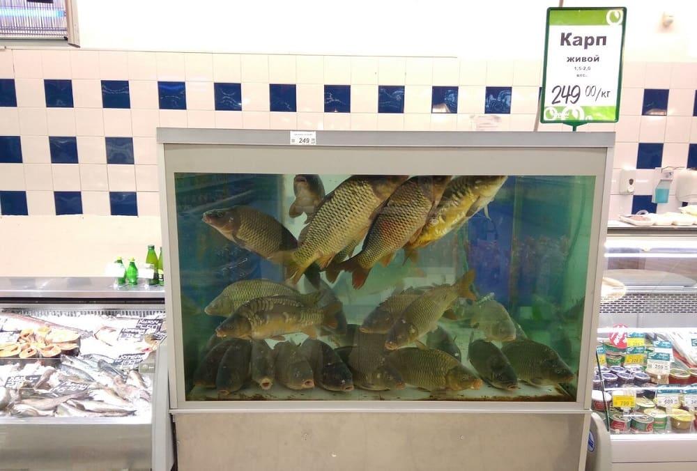 Торговый аквариум для живой рыбы