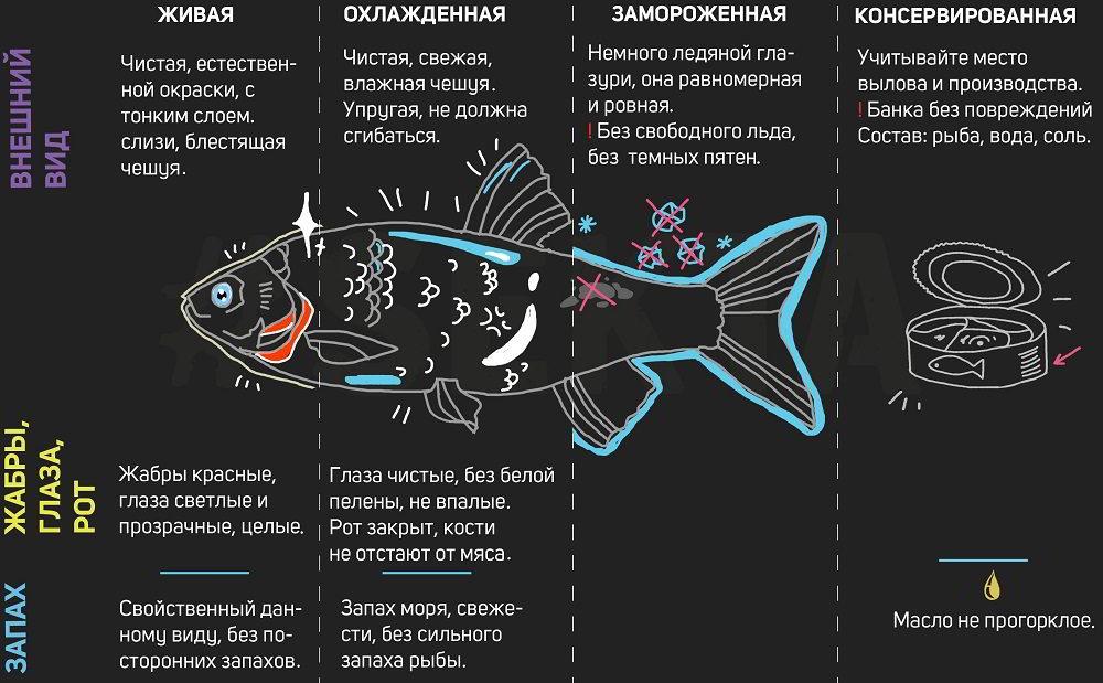 Выбор рыбы в магазине