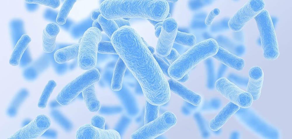 Бактерии в йогурте